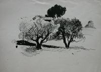 DRIES La-Ciotat-arbres.jpg